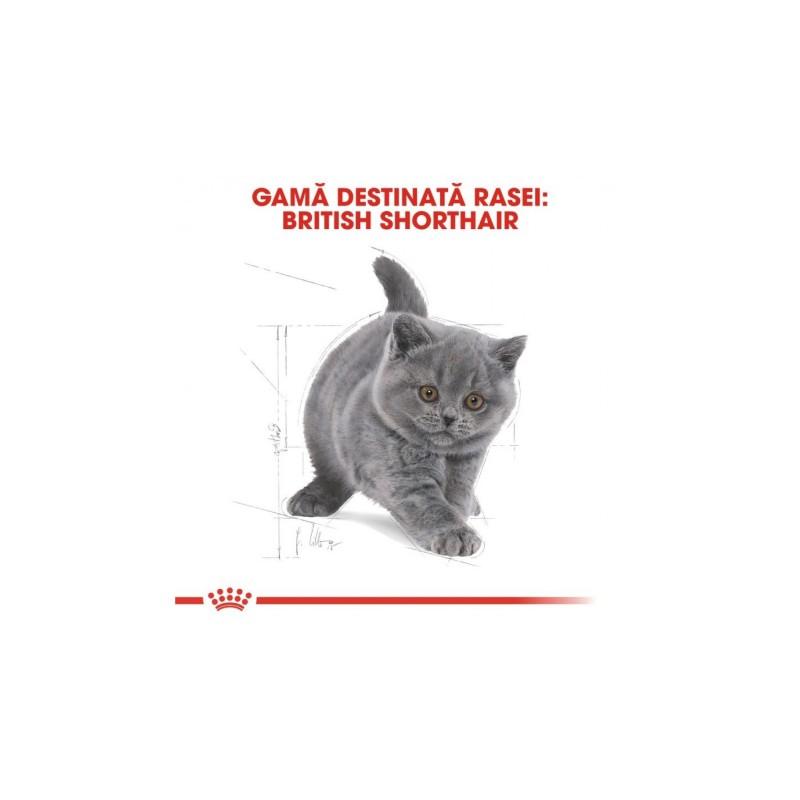 Hrana uscata Royal Canin British Shorthair Kitten
