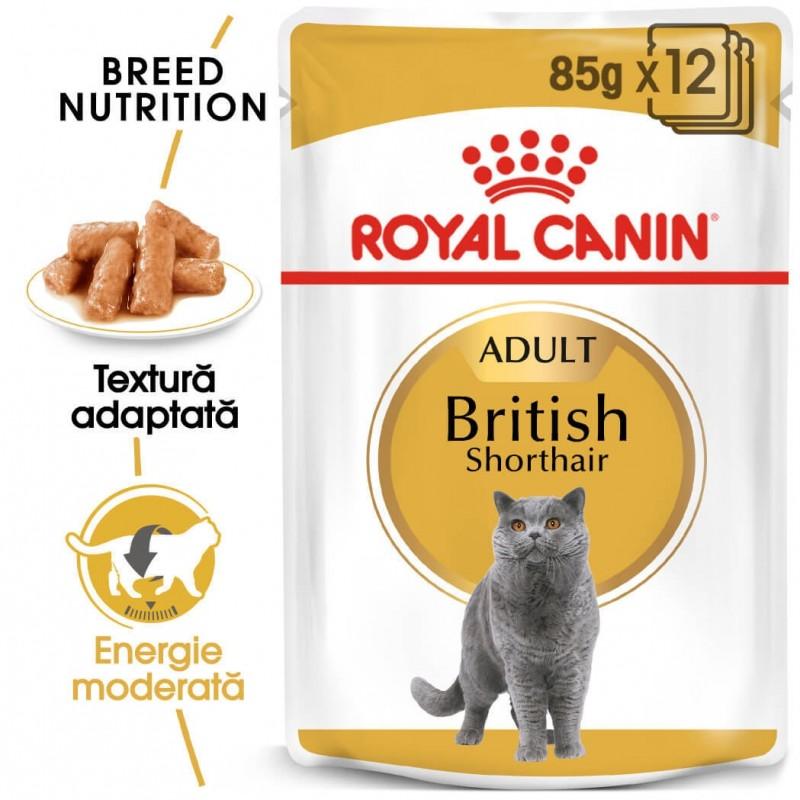 Hrana umeda Royal Canin British Shorthair Adult pachet 12x85 g