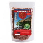 Exo Gammarus hrana pentru broaste testoase