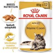 Hrana umeda Royal Canin Maine Coon Adult pachet 12x85 g