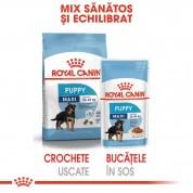 Royal Canin Maxi Puppy Umeda- 10x140 g
